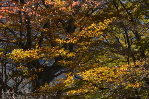 f:id:kurokoshusaru:20141105193611j:image