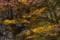 逆光の森6