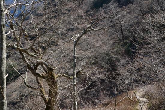 f:id:kurokoshusaru:20141111191212j:image