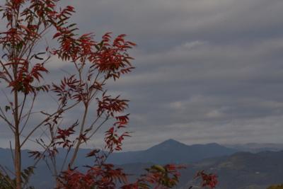 f:id:kurokoshusaru:20141203190922j:image