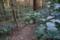 杉林とアオキ