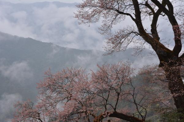 f:id:kurokoshusaru:20150330190748j:image