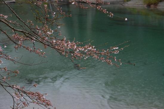 f:id:kurokoshusaru:20150331185847j:image