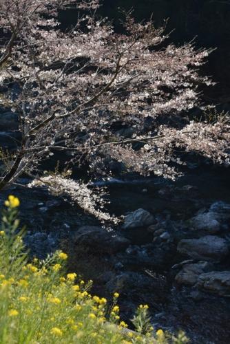 f:id:kurokoshusaru:20150401190003j:image