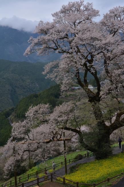 f:id:kurokoshusaru:20150406185921j:image