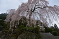 大石家の桜