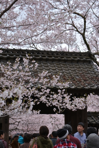f:id:kurokoshusaru:20150414185952j:image