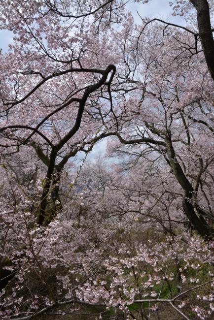 f:id:kurokoshusaru:20150414191213j:image