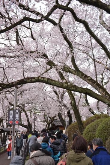 f:id:kurokoshusaru:20150415194847j:image