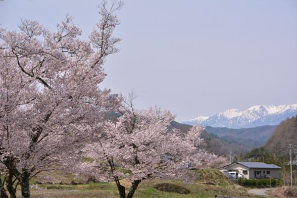 f:id:kurokoshusaru:20150416225532j:image