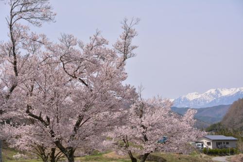 f:id:kurokoshusaru:20150418180943j:image