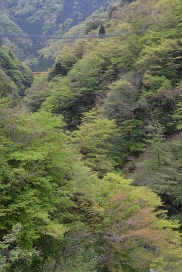 f:id:kurokoshusaru:20150501200942j:image