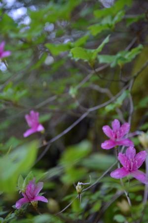 f:id:kurokoshusaru:20150508205905j:image
