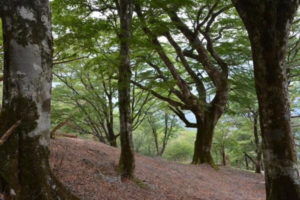 f:id:kurokoshusaru:20150617191335j:image