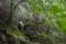 自然の森へ