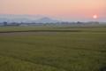香長平野の田圃