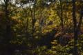 林道沿いの紅葉