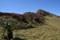 山上の笹原