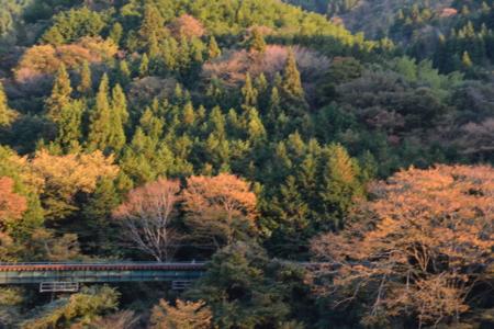 f:id:kurokoshusaru:20151113180935j:image