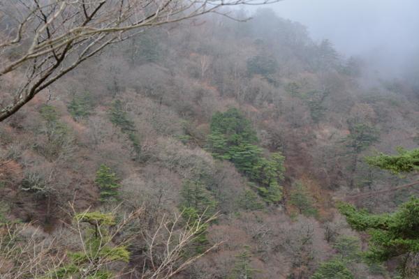 f:id:kurokoshusaru:20151117190506j:image