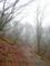 雨の山道 (2)