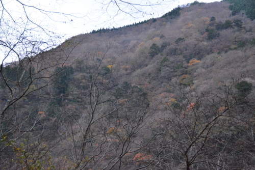 f:id:kurokoshusaru:20151130181834j:image