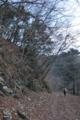冬枯た林道