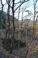 クヌギと榾木