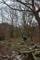 裸木の森へ