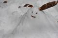 雪だるま (3)