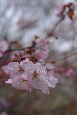 f:id:kurokoshusaru:20160405190320j:image