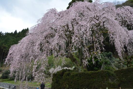 f:id:kurokoshusaru:20160406190041j:image