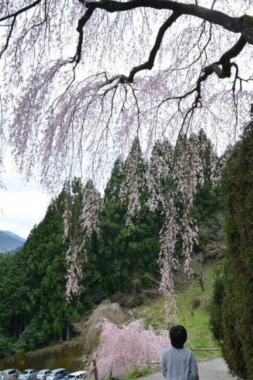 f:id:kurokoshusaru:20160406190242j:image
