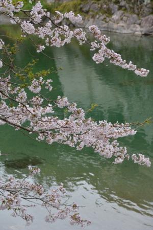 f:id:kurokoshusaru:20160408180329j:image