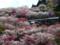 花桃の郷 (2)