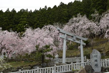 f:id:kurokoshusaru:20160414184741j:image