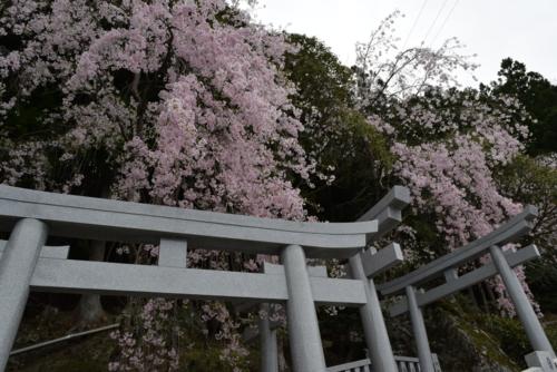 f:id:kurokoshusaru:20160414185405j:image