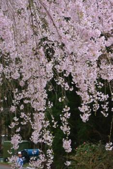 f:id:kurokoshusaru:20160415190134j:image