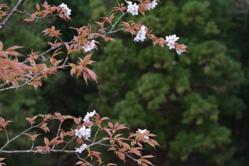 f:id:kurokoshusaru:20160415190927j:image