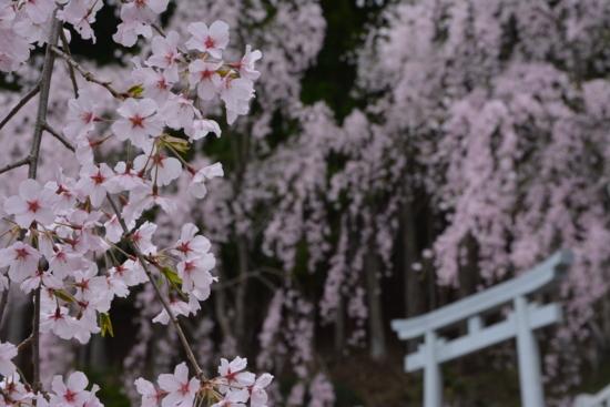 f:id:kurokoshusaru:20160415192347j:image