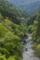 新緑の祖谷峡