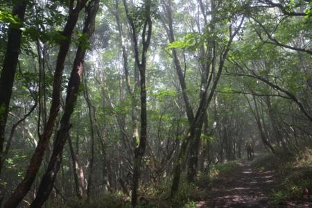 頂上部の森