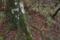 山毛欅の根元