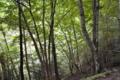 林道の木々