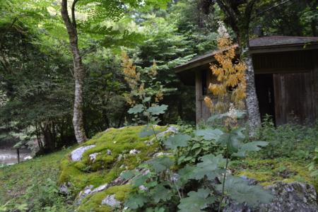 f:id:kurokoshusaru:20160816190032j:image