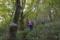 山毛欅;の森へ