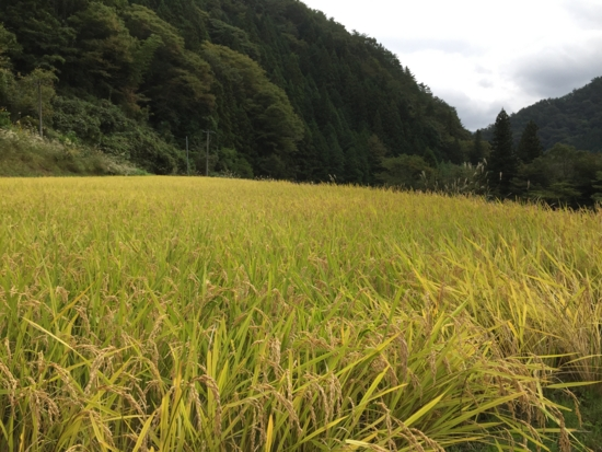 f:id:kurokoshusaru:20161020212513j:image