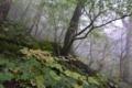 ケヤキ平の森