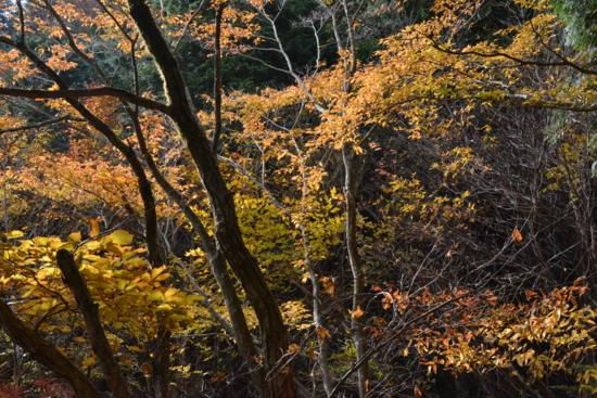 f:id:kurokoshusaru:20161116184234j:image