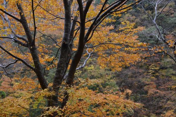 f:id:kurokoshusaru:20161120183250j:image